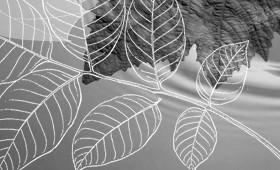Mandala {Leaves}